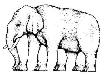 How Many Legs Does An Elephant Have?