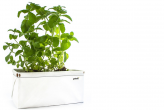 Patch Planter for Self-Watering Urban Gardens